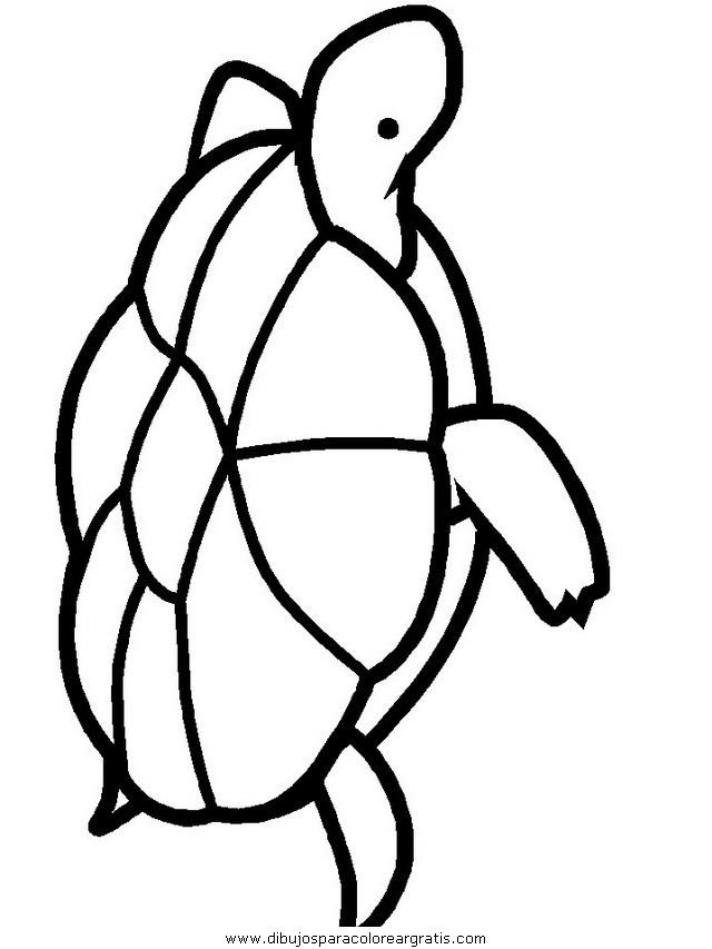 animales/tortugas/tortugas_14.JPG