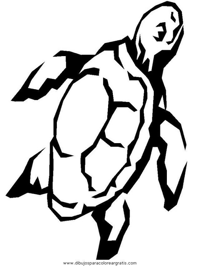 animales/tortugas/tortugas_16.JPG