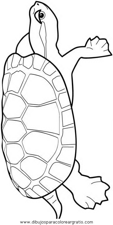 animales/tortugas/tortugas_24.JPG