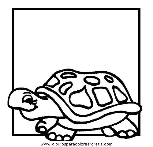 animales/tortugas/tortugas_27.JPG