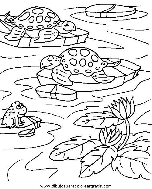animales/tortugas/tortugas_28.JPG