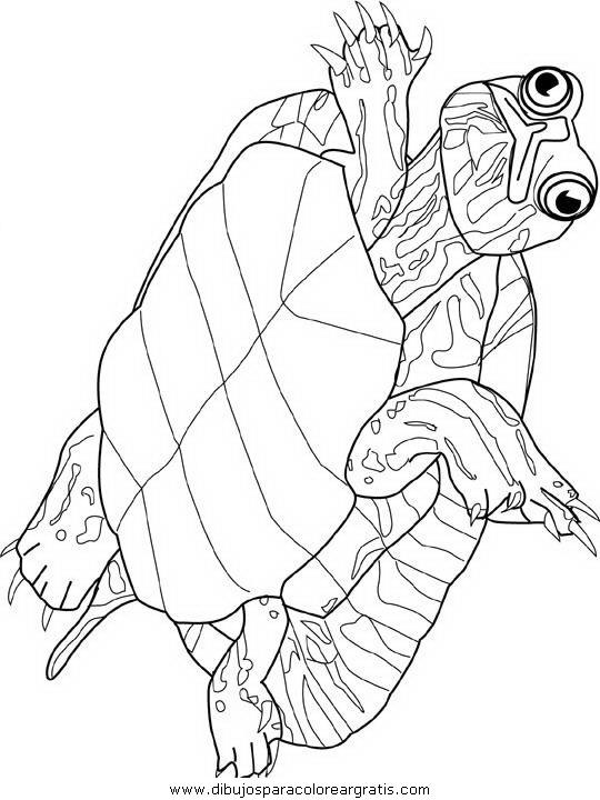 animales/tortugas/tortugas_30.JPG