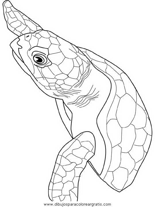 animales/tortugas/tortugas_31.JPG