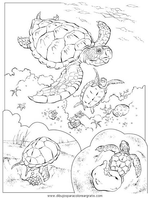 animales/tortugas/tortugas_32.JPG