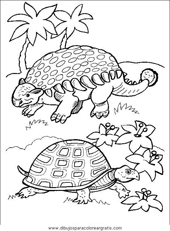animales/tortugas/tortugas_35.JPG