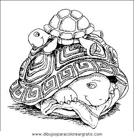 animales/tortugas/tortugas_37.JPG