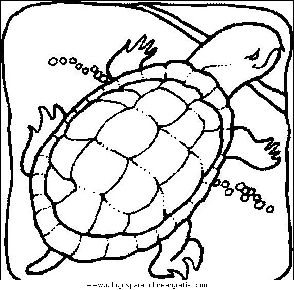 animales/tortugas/tortugas_42.JPG