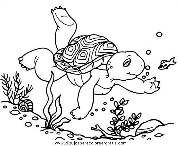 animales/tortugas/tortugas_44.JPG