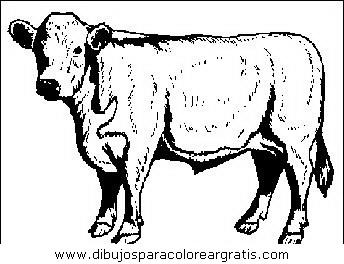 animales/vacas/vacas_25.JPG