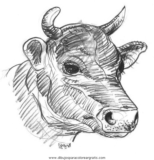 animales/vacas/vacas_37.JPG