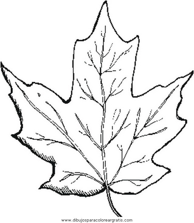 Toronto Maple Leafs Coloring Pages Coloring Pages Toronto Maple Leafs Coloring Pages