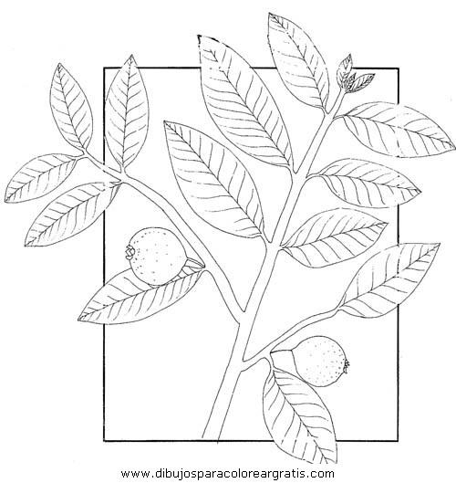 Dibujo Guayaba2 En La Categoria Mixtos Diseños