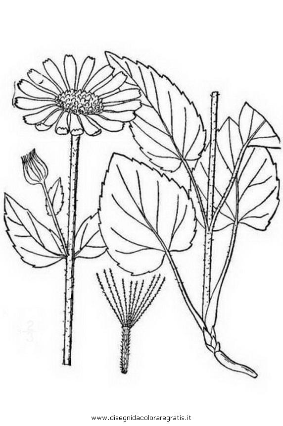 Arbustos Para Colorear Dibujos Acolorear Pictures