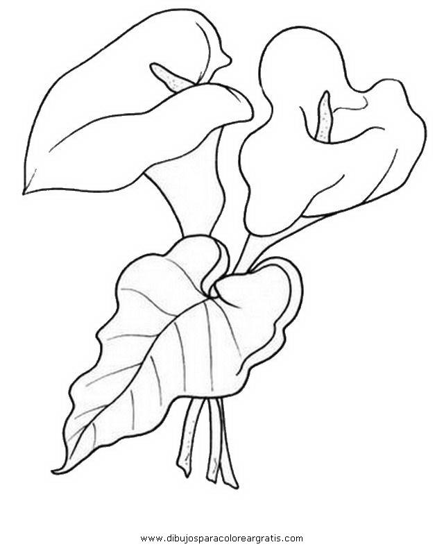 Dibujo Alcatraz 10 En La Categoria Naturaleza Disenos