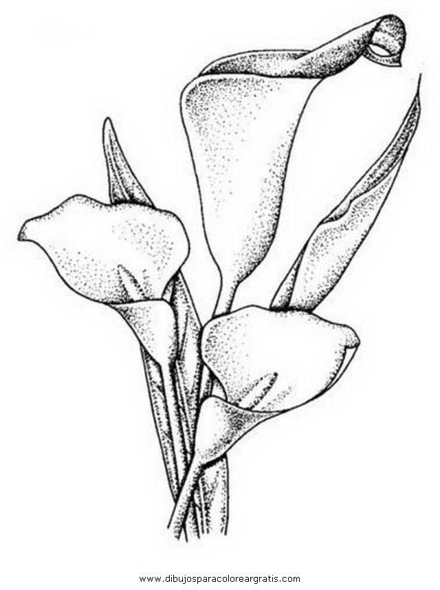 naturaleza/flores/alcatraz_11.JPG