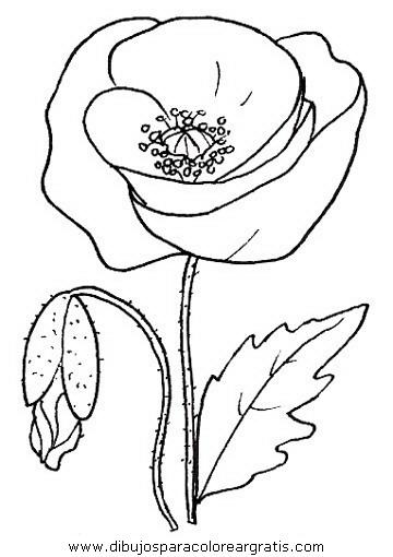 naturaleza/flores/amapolas_3.JPG