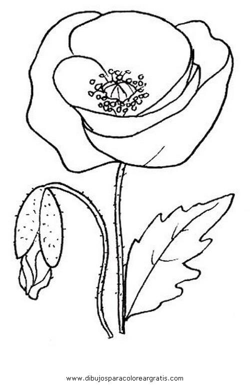 naturaleza/flores/amapolas_5.JPG