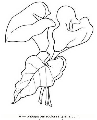 naturaleza/flores/calas_1.JPG