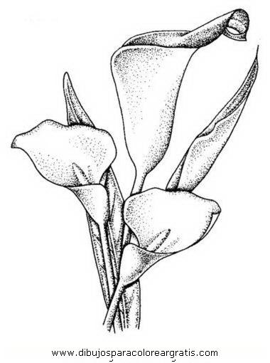 naturaleza/flores/calas_2.JPG