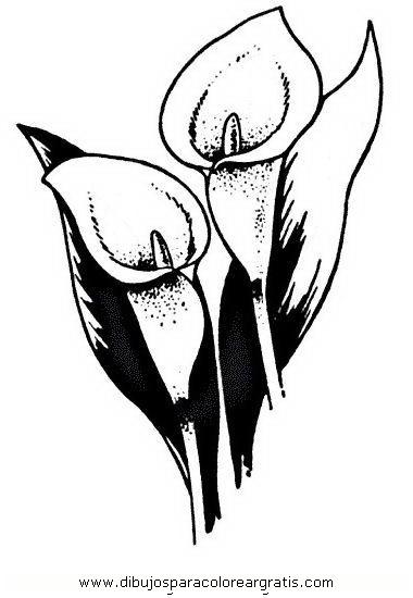 naturaleza/flores/calas_4.JPG