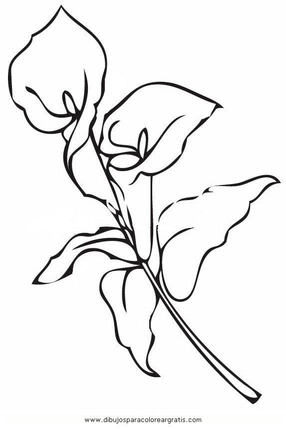 naturaleza/flores/calas_8.JPG