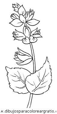 naturaleza/flores/flores_007.JPG