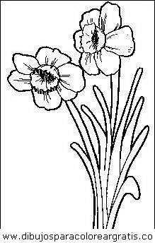 naturaleza/flores/flores_010.JPG