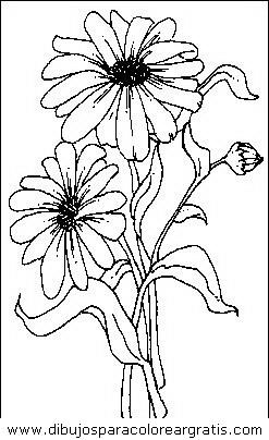 naturaleza/flores/flores_018.JPG