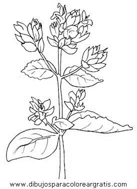 naturaleza/flores/flores_019.JPG