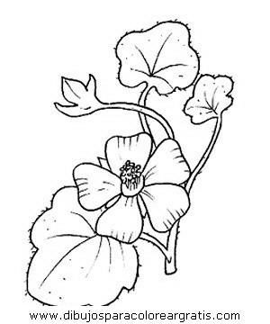 naturaleza/flores/flores_024.JPG