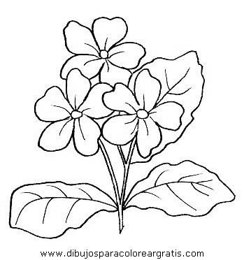 naturaleza/flores/flores_029.JPG