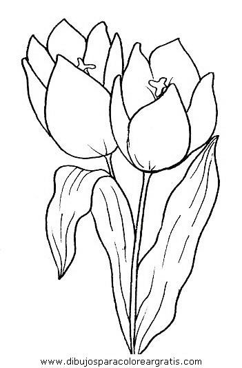 naturaleza/flores/flores_039.JPG