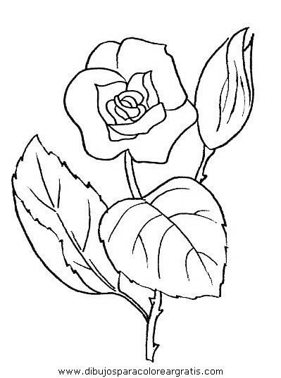 naturaleza/flores/flores_044.JPG