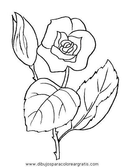 naturaleza/flores/flores_045.JPG