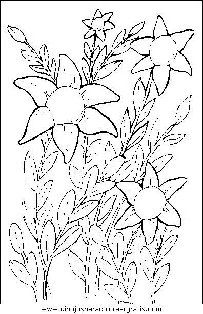 naturaleza/flores/flores_054.JPG