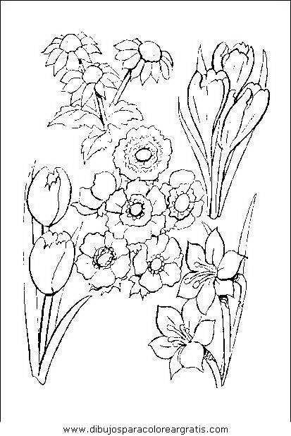 naturaleza/flores/flores_061.JPG