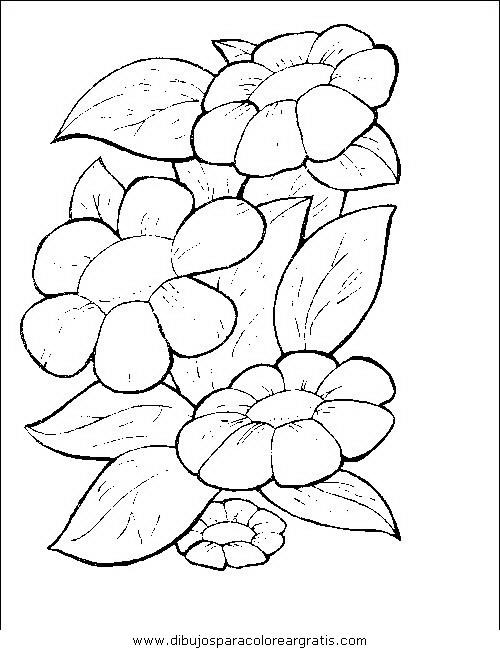 naturaleza/flores/flores_073.JPG