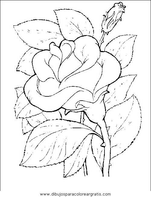 naturaleza/flores/flores_077.JPG