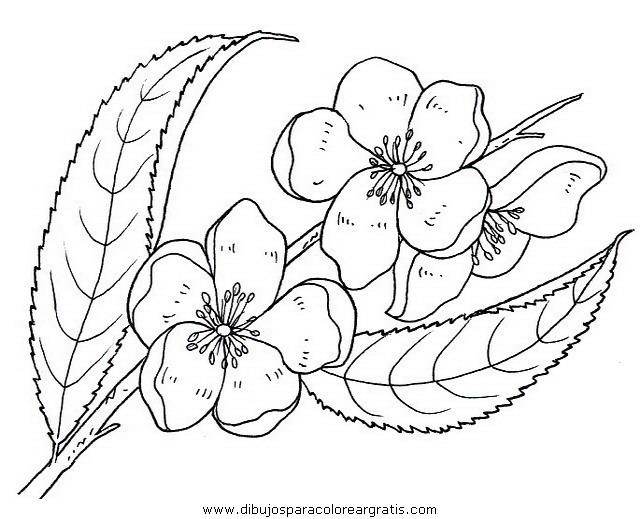 naturaleza/flores/flores_080.JPG