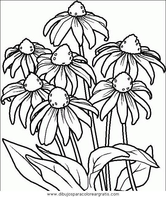 naturaleza/flores/flores_083.JPG