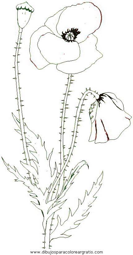 naturaleza/flores/flores_085.JPG