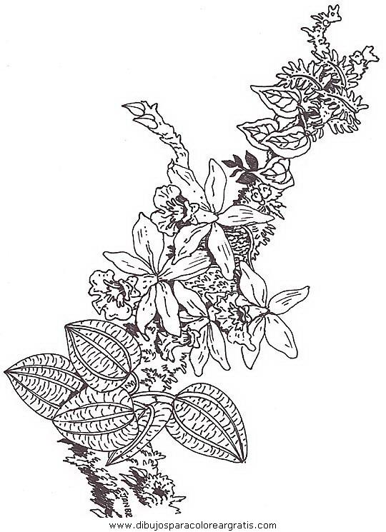 naturaleza/flores/flores_094.JPG