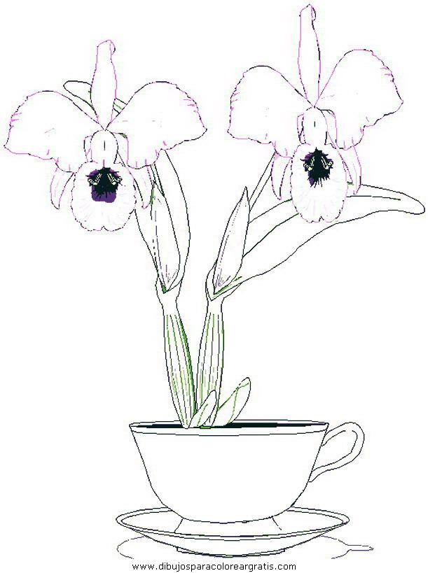 naturaleza/flores/flores_105.JPG