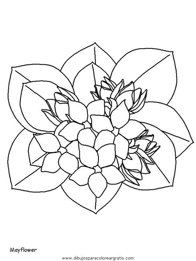 naturaleza/flores/flores_112.JPG