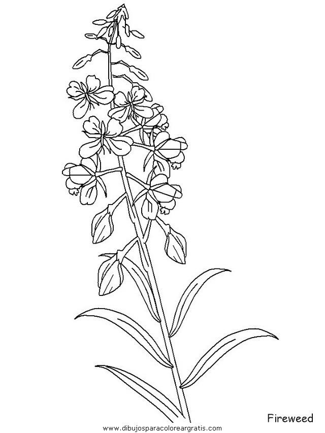 naturaleza/flores/flores_133.JPG