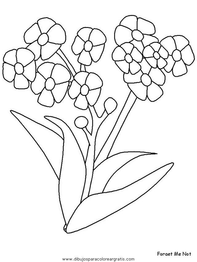naturaleza/flores/flores_151.JPG