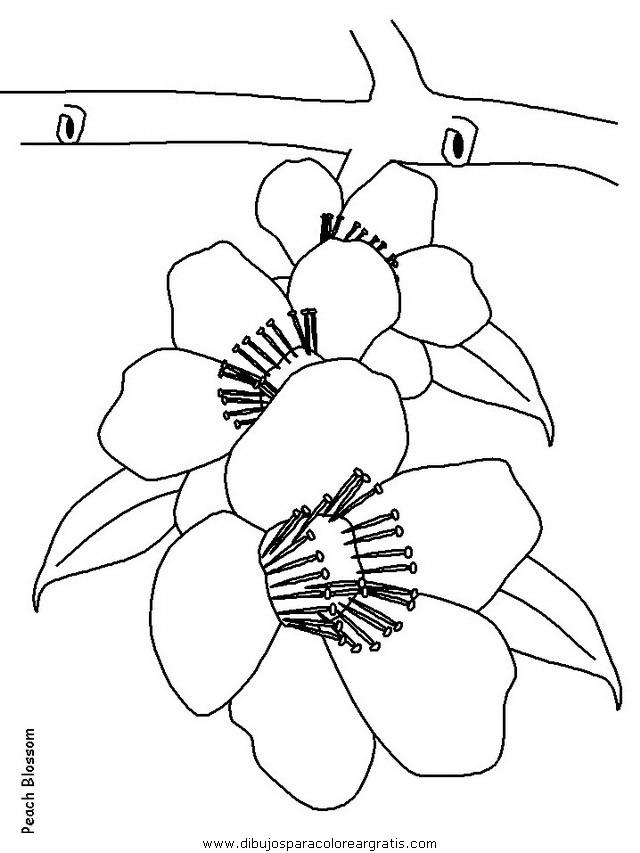 naturaleza/flores/flores_164.JPG