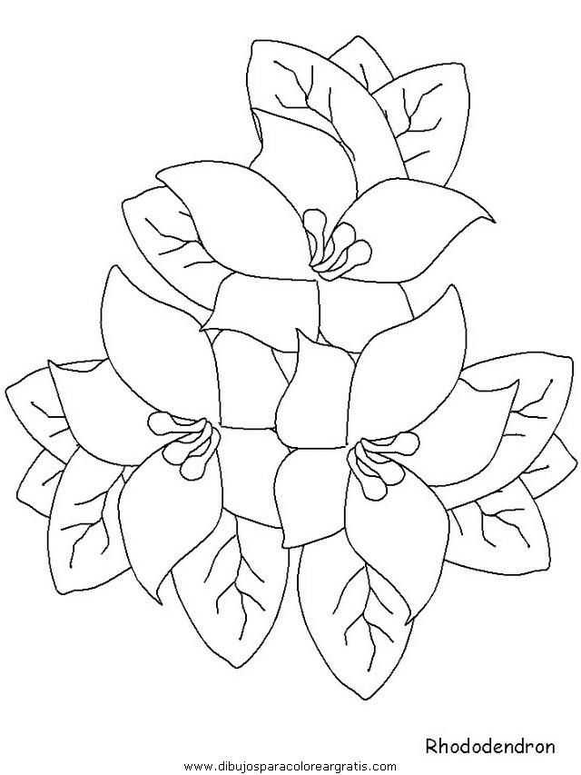 naturaleza/flores/flores_168.JPG