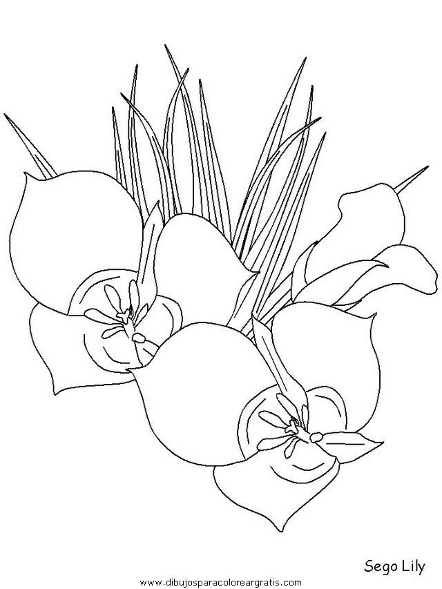 naturaleza/flores/flores_171.JPG