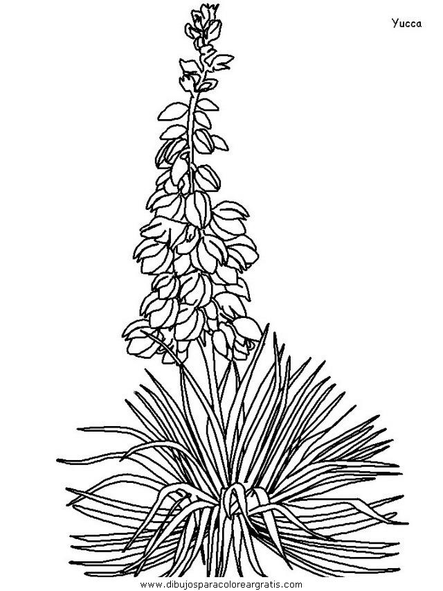 naturaleza/flores/flores_173.JPG